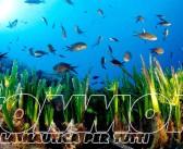 Il Posidonia Festival sbarca sull'isola di Carloforte dal 26 al 28 giugno