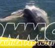 balena gommone