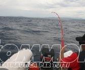 Nuove modalità per l'esercizio della pesca sportiva in Sardegna